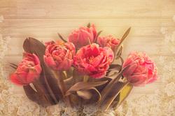 Наклейки Весенние тюльпаны