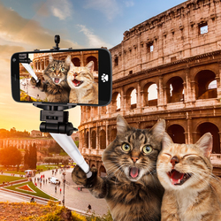 Наклейки Коты в Риме
