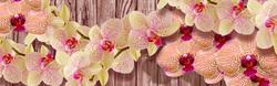 Наклейки Прекрасная орхидея
