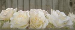 Наклейки Белые розы