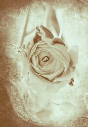 Наклейки Бежевая роза