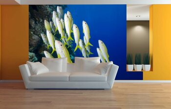 Фотообои на стену fish-05011005