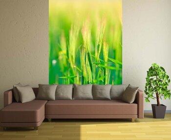 Фотообои на стену photo-30060937