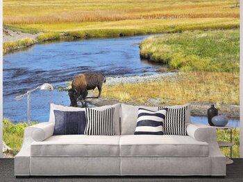Фотообои на стену Котята на диване
