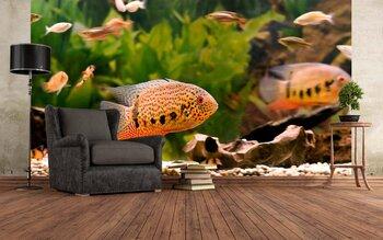 Фотообои на стену fish-05011014