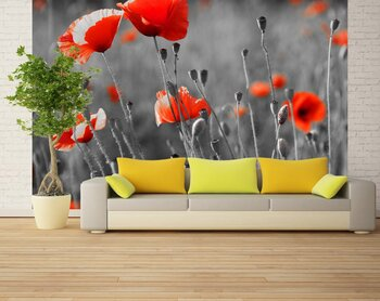 Фотообои Red poppies on  field
