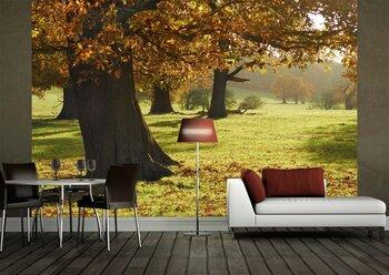 Фотообои на стену Осенний пейзаж
