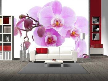 Фотообои на стену Розовая орхидея