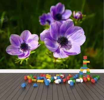 Фотообои Пурпурные анемоны в цветочном саду