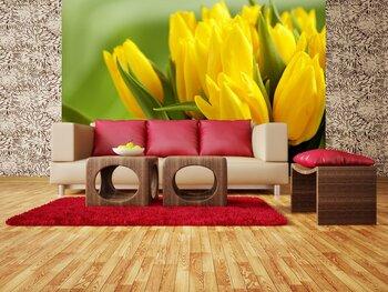 Фотообои на стену Тюльпаны