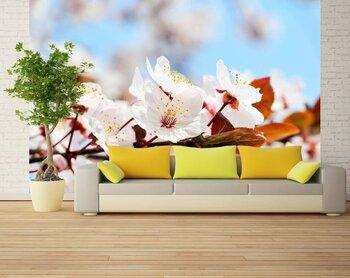 Фотообои на стену Яркие цветы в горшочках