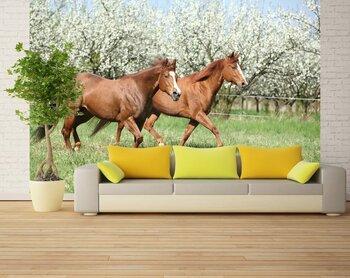 Фотообои на стену Лошадь в осеннем парке