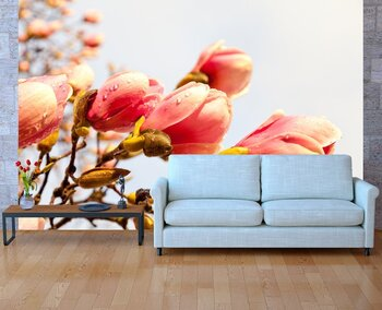 Фотообои на стену Цветы сакуры