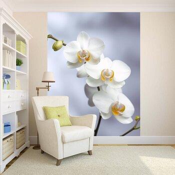 фото фотообои орхидеи