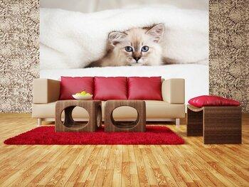 Фотообои на стену Русская голубая порода кошек