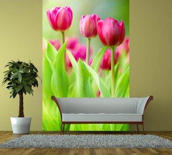 Фотообои на стену Обручальные кольца на тюльпанах