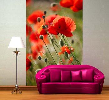 Фотообои Red poppies