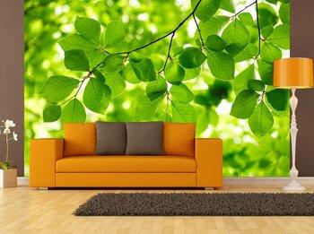 Фотообои Зеленые листья