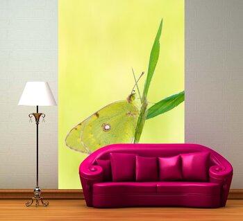 Фотообои на стену Красивая бабочка на цветке
