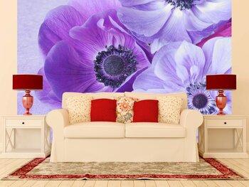 Фотообои на стену Цветы анемона