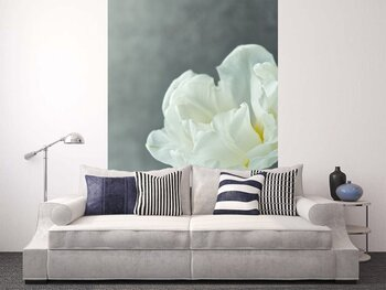 Фотообои Белый тюльпан