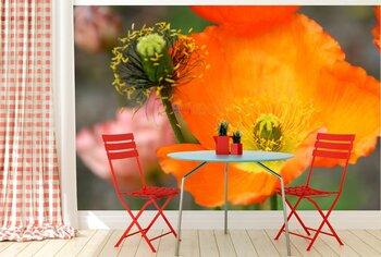 Фотообои Оранжевые маки