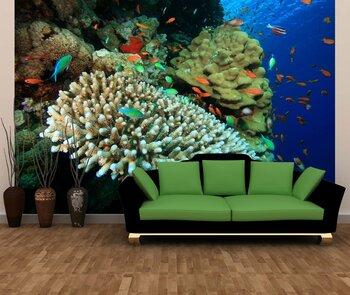 Фотообои на стену coral-05011000