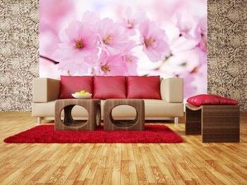 Фотообои Japanese cherry tree in blossom