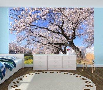 Фотообои на стену вишни в цвету
