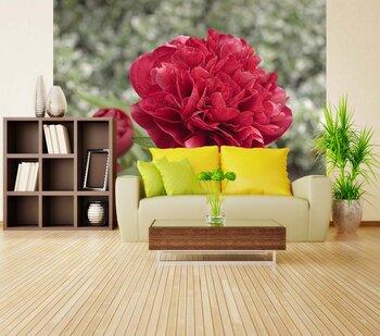 Фотообои на стену rose-01120975