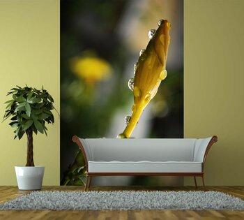 Фотообои на стену photo-22090927