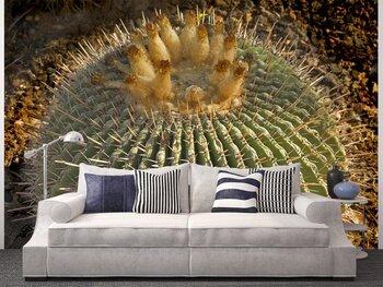 Фотообои Большой круглый кактус в ботаническом к саду