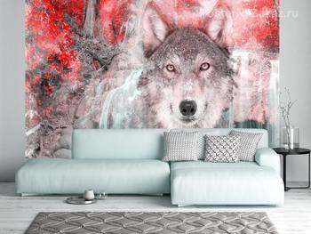 Фотообои Взгляд волка
