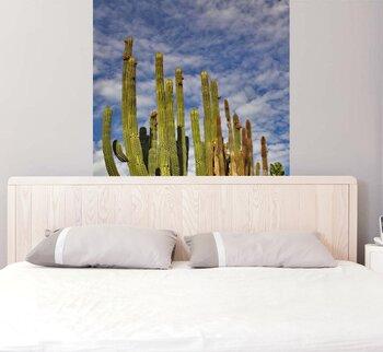 Фотообои Желтые и зеленые кактусы на фоне неба и облаков