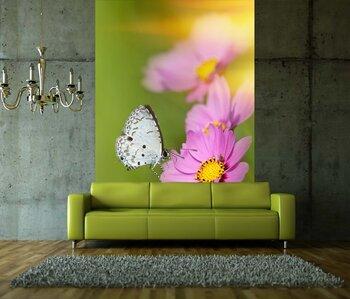 Фотообои хризантема с бабочкой