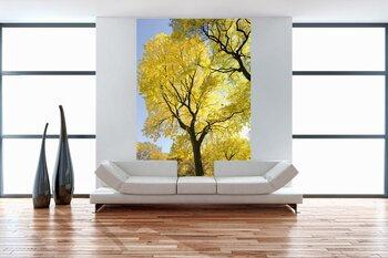 Фотообои на стену Красная листва