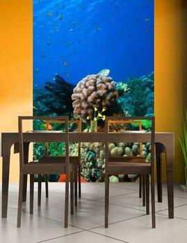 Фотообои на стену coral-05011002