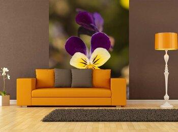 Фотообои Двухцветный цветок анютиных глазок