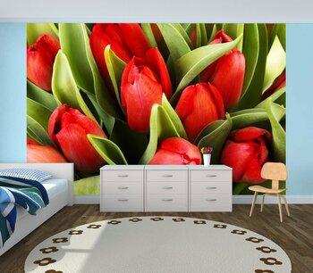 Фотообои на стену розовые тюльпаны