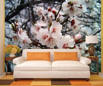 Фотообои абрикос