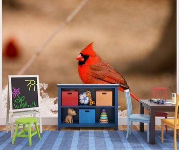 Фотообои Птица