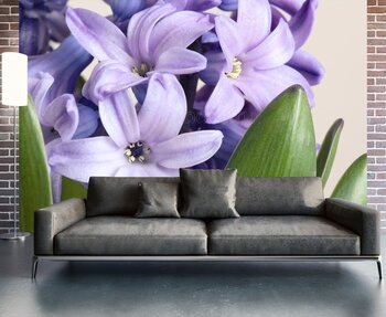 Фотообои Фиолетовый гиацинт