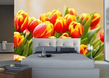 Фотообои на стену Красочные  тюльпаны
