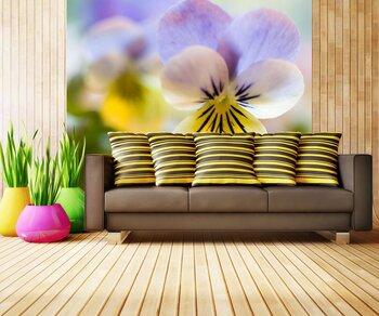 "Фотообои Цветок ""viola tricolor"""