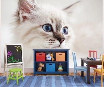 Фотообои Сибирский котенок