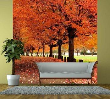 Фотообои на стену Осенние краски
