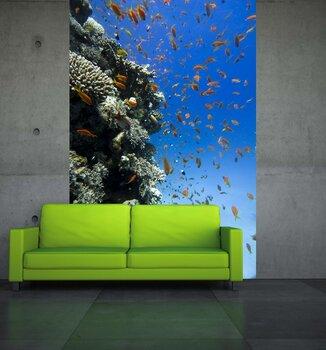 Фотообои на стену Гора кораллов в Красном море