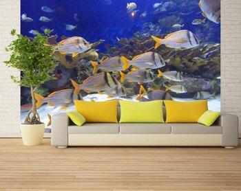 Фотообои на стену underwater-06010927