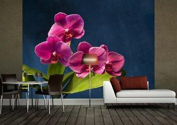 Фотообои на стену Фиолетовая орхидея