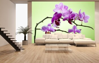 Фотообои на стену orchid and bamboo grove on black background